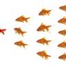 Beeld HR en leiderschapscompetenties: aanpassingsvermogen