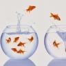 Beeld Negatief imago jobhoppen staat aantrekken talent in de weg